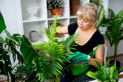 Florist at work in greenhouse Royalty Free Stock Photo