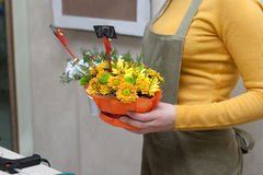 Florist at work holding composition of cut flowers Royalty Free Stock Photo
