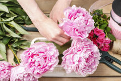Florist at work: woman making floral decoration of pink peonies Royalty Free Stock Photos