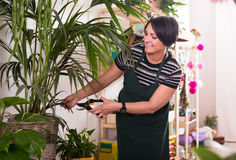 Florist working in floral shop Stock Photography