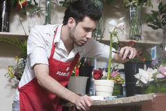 Florist Working In Flower Shop Stock Photography