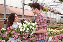 Florist working with flowers in greenhouse Royalty Free Stock Image