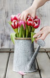 Florist workspace: woman arranging bouquet of tulips Royalty Free Stock Photos