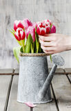 Florist workspace: woman arranging bouquet of tulips Stock Images
