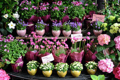 Florista Fotos de Stock Royalty Free