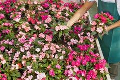 Florista fotografía de archivo
