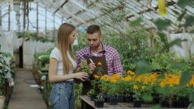 Florista alegre joven del hombre que habla con el cliente y que da consejo mientras que trabaja en centro de jardinería almacen de video