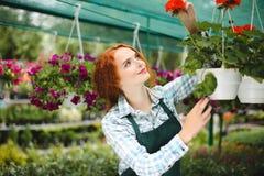 Florista bonito do ruivo no avental que trabalha com flores Senhora de sorriso nova que está com flores e que olha felizmente de  Foto de Stock