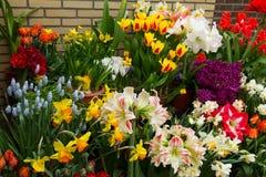 Florista colorido Fotografia de Stock Royalty Free