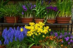 Florista colorido Imagens de Stock Royalty Free