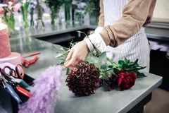 Florista competente que usa las flores frescas para el ikebana foto de archivo libre de regalías