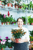 Florista con Calamondin t en la tienda de flor Fotografía de archivo libre de regalías