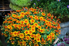 Florista da rua Imagens de Stock Royalty Free