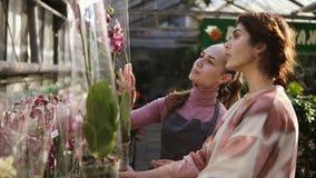 Florista de sexo femenino sonriente de los jóvenes en el delantal que ayuda a un cliente femenino a elegir una maceta con la flor metrajes