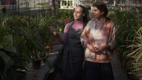 Florista de sexo femenino sonriente de los jóvenes que camina con su jefe y que le muestra diversas plantas, explicando la inform metrajes