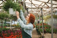 Florista de sorriso agradável do ruivo no avental que trabalha com flores Jovem senhora que está com flores e que olha felizmente Imagens de Stock
