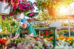 Florista em sua loja do jardim Foto de Stock