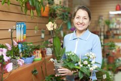 Florista fêmea com Phalaenopsis Foto de Stock Royalty Free