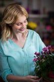 Florista fêmea que arranja flores na cesta Imagem de Stock