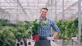 Florista hermoso que sostiene spathiphyllum almacen de metraje de vídeo