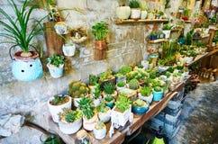 Florista, loja de flor, flores em pasta Fotografia de Stock Royalty Free