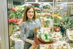 Florista no avental com o ramalhete fresco no florista Imagem de Stock