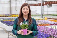 Florista que planta las flores Fotos de archivo libres de regalías