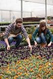 Florista que planta las flores Fotografía de archivo