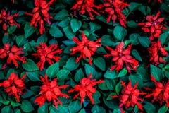Florista imagen de archivo libre de regalías