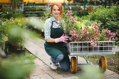 Florista sonriente bonito en el delantal y los guantes rosados que miran feliz in camera mientras que trabaja con las flores en c Imagenes de archivo