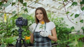 Florista sonriente joven de la mujer del blogger en el blog video que habla y de registración del delantal para su vlog en línea  imagen de archivo libre de regalías