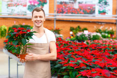 Florista sonriente que sostiene una planta Imagen de archivo