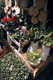 Florista, venda da flor Foto de Stock