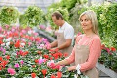 Floristas agradables que trabajan en el invernadero Foto de archivo