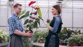 Floristas que engañan alrededor mientras que cuida para las flores almacen de metraje de vídeo