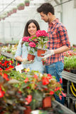 Floristas sonrientes jovenes hombre y mujer que trabajan en el invernadero Imágenes de archivo libres de regalías
