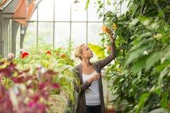 Floristenfrau, die im Gewächshaus arbeitet Lizenzfreie Stockfotografie