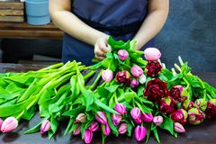 Floristenmädchen macht einen Blumenstrauß von den Tulpen stockfoto