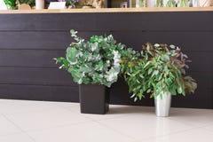 Floristería interior, pequeña empresa del estudio del diseño floral imágenes de archivo libres de regalías