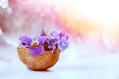 Floristic σύνθεση με τις βιολέτες και forget-me-not τα λουλούδια με λίγα λόγια στο όμορφο κλίμα bokeh Στοκ φωτογραφία με δικαίωμα ελεύθερης χρήσης