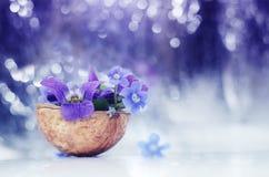 Floristic σύνθεση με τις βιολέτες και forget-me-not τα λουλούδια με λίγα λόγια στο όμορφο κλίμα bokeh Στοκ Εικόνα