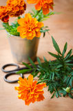 Floristic background with old vintage scissors and marigold flower. Floristic background with old vintage scissors and marigold flower on wooden background Stock Photos