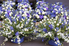 Floristic composition Stock Image