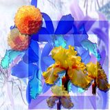 Floristic etude yellow flowers on dark blue. Photo processing of photos of colors and floristic design in the form of a flower poster Stock Image