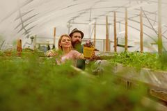 Floristics. happy couple loves floristics. floristics greenhouse. man and woman has floristics business. working with stock images