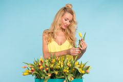 Floristics, holidays, flower shop and people concept - Beautiful blond young woman fixing bouquet of tulips on blue stock photography