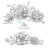 Floristische Zusammensetzung von Succulents Stockfoto