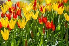 floristry Garten, dekorative Blumen, flaumig, mit den schönen Blumenblättern stockbild