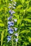floristry Garten, dekorative Blumen, flaumig, mit den schönen Blumenblättern lizenzfreie stockfotos