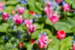 floristry Tuin, decoratieve bloemen, pluizig, met mooie bloemblaadjes stock foto's
